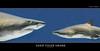 SAND TIGER SHARK (Matthias Besant) Tags: fish nature deutschland shark marine marin natur fisch sharks fishes hai pisces naturfotos fische seaanimals haie sandtiger sandshark sandtigershark seaanimal marineanimals naturfoto marineanimal carchariastaurus greynurseshark meerestiere meerestier charchariastaurus saltwaterfishes meeresfisch sandhai meeresfische sandtigerhai meerwasserfisch meerwasserfische spottedraggedtoothshark seawaterfishes bluenursesandtiger matthiasbesant carcharhinustaurus grauersandhai schnauzenhai