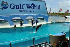 dolphinshow001 (BigPeteZ) Tags: world show park city sea beach water animal sport swim mammal nikon marine underwater gulf florida outdoor dolphin fl panama pcb panamacitybeach cetacean gulfworld gulfworldmarinepark