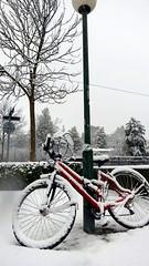 Natale a Zurigo (LuxTDG) Tags: christmas moon snow mountains tree fog montagne stars lights chocolate swiss zurich tram luna neve luci svizzera nebbia albero cioccolato alleys stelle vicoli funicolare funicolar sprngli zurigo2014
