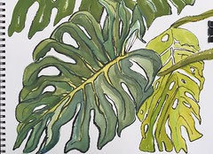 Fairchild Tropical Gardens Split Leaf Philodendron 06/11/2015 (Aldo305) Tags: from rain forest watercolor sketch leaf rainforest split philodendron downstream 2015 miamiflorida june11 fairchildtropicalbotanicgardens urbansketchers