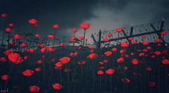 Vibrations (♛ Baronne ♛) Tags: life flowers light shadow red sky cloud black beautiful field rose french rouge sadness 3d war poetry noir mesh picture ground sl photograph secondlife poppy poppies terre guerre tristesse vie poesie keke espoir coquelicots barbeds