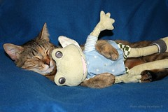 Relax  (alogico) Tags: cat relax peace frog riposo pace moment rana gatto peluche pausa alogico