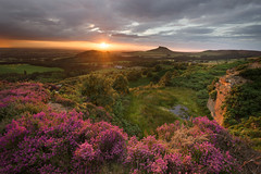Cockshaw Hill (Stephen Tierney.) Tags: view landscape ef1635mmf4 cockshawhill hillside canon6d wwwstephentierneycouk greatayton canonef1635mm northyorkshire golden roseberrytopping summer stephentierney heather yellow lowsun sunset