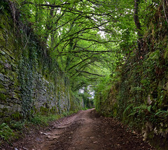 Camino entre la arboleda (Peter Wayne) Tags: verde camino naturaleza arboleda paisaje reposo tranquilidad ruinas nikond5300 caminodesantiago lugo