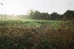 fields (mecann) Tags: nikonfa analogue filmphotography filmisnotdead 35mm nikkor24mm28 kodakcolor100