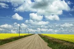 Canola Road (John Andersen (JPAndersen images)) Tags: road summer sky cloud storm alberta prairie canola cumulonimbus nimbostratus