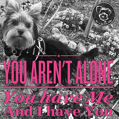 Couldnt ask for a better partner (itsayorkielife) Tags: yorkiememe yorkie yorkshireterrier quote
