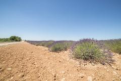 La lavanda (Mauro_Amoroso) Tags: sky panorama france green nature landscape nikon purple d2x lavander francia paesaggio nationalgeographic provenza lavanda natgeo d600 nital valensole nikonlandscape nikonitalia amorosomauroadventures mauroamorosoadventures