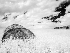 (Between) Earth and Sky (DomiKetu) Tags: blackandwhite bw white black monochrome clouds landscape ir mono landscapes blackwhite panasonic infrared hayballs blackwhitephotos hayball 850nm tz10