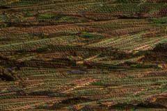 Salicylic Acid by Polarized Light Microscopy (Trav H) Tags: acid antiacne art aspirin focus gallery helicon heliconfocus heliconremote light micrograph microscope microscopeart microscopy polarized polarizedlightmicroscopy remote salicylic salicylicacid birefringence crystals microart plm