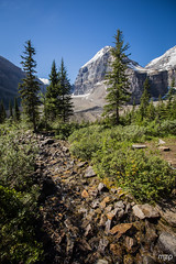"During the ""Plain of the six glaciers"" hike. (mzagerp) Tags: road trip usa canada rockies rocheuses etats unis mzagerp banff national park lake louise moraine lac emerald meraude plain six glaciers columbia icefield glacier"