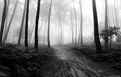 B&W version (Guillermo Carballa) Tags: fog mist forest woods trees pines carballa olympus em5 bw light