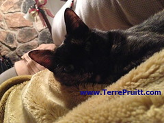 2015 - Dec. 10 Esmeralda for 07.27.16 post (Terre's Photos) Tags: smokeyandesmeralda thedancingcat catadoption picturesofcats catparents danceexercise terrepruitt niateacher niabluebelt cpt sanjosenia sanjoseniaclasses sanjoseexerciseclasses wwwhelpyouwellcom wwwterrepruittcom sanjoseniateacher piyo pilates yoga exercise workout sanjoseworkout niasanjose danceexerciseclass danceworkout cardiodance groupexclasses ymca nia niaclass niatechnique sjcityfit