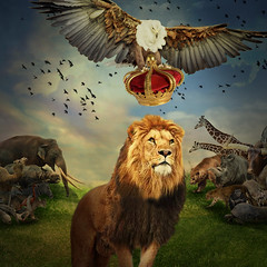 Coronation ceremony (jaci XIII) Tags: animal leo guia realeza surrealismo lion animals eagle royalty surrealism