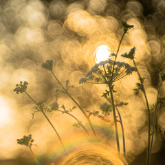 Dream of Tranquility - Explore # 1 (*Capture the Moment*) Tags: 2016 backlight f28 gegenlicht meyergrlitztrioplan10028 munich mnchen sonnenuntergang sunset