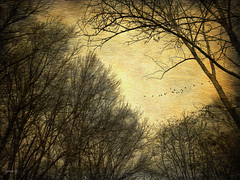 #Lieve  il dolore che parla. Il grande dolore  muto..... (graceindirain) Tags: trees fly textured graceindirain dedication