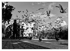 Parque de las Palomas - Pigeon Park, Old San Juan, Puerto Rico (GAPHIKER) Tags: parquedelaspalomas pigeonpark pigeon palomas park parque oldsanjuan sanjuan puertorico birds corn feed fun