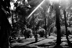 a stroll in the park (Gabriella Sunshine) Tags: france lebanon beirut ambassade embassy residence french