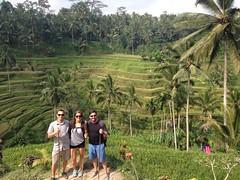 Terasses de riz Tegallalang