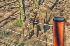 Elefant... (hobbit68) Tags: animal animals sommer tiere tier canon sonne outdoor alt