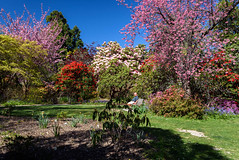 Lots of Hot Colour (Jocey K) Tags: flowers trees newzealand christchurch sky people spring shadows blossom lawn rhododendron azalea ilamgardens