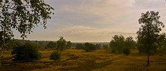 Vantage Point (Wijnand Kroes Photography) Tags: trees clouds landscape heath veluwe