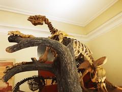 DSCF7459 (raissacrisss) Tags: preguia gigante animal prhistoria histria museu dinossauros dinossauro dino eradogelo era do gelo sid esqueleto historia