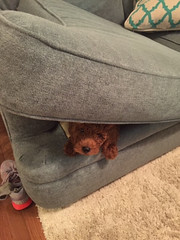 Daphne & Nolan's Theodore found a great hiding spot!