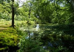 Green it is! (joeke pieters) Tags: 1280151 panasonicdmcfz150 hetenzerinck vorden achterhoek gelderland nederland netherlands holland vijver pond landschap landscape landschaft paysage reflections