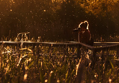 focusing on a world full of movement (marianna_a.) Tags: fence friday hff boardwalk bulrushes golden light photographer flies bokeh mariannaarmata p2400860