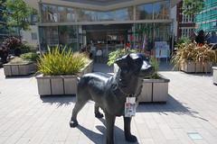 Dog in Duke Street garden (Bolckow) Tags: dukestreet london grosvenorestate grosvenor