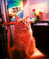 Next Top Model (kutzz) Tags: kharkiv ukraine charkow painting acryl kitten cat red posing hobby drawing portrait indoor