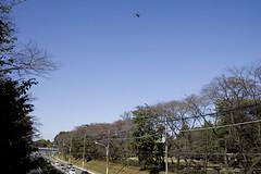 A SMALL AIRPORT, SOME PARKS AND CLOUDS - XLIII (Jussi Salmiakkinen (JUNJI SUDA)) Tags: chofu tokyo japan cityscape park sky cloud wood autumn landscape nogawa