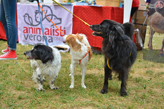 Frammenti del festival Soaveg (loc. Montorio - VR) 23-24 Luglio 2016 (NoemiM4) Tags: festival soaveg vegan life ethics animals love photography nikon people dogs colours nature