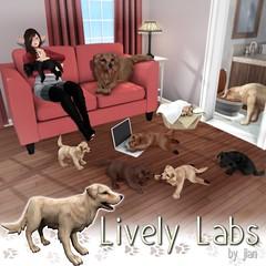 JIAN Lively Labs @ The Arcade September ([JIAN]) Tags: secondlife mesh pet pets dogs dog canine labrador golden retriever companion newrelease thearcade arcade kaliafirelyte jian gacha key