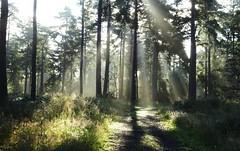 Sunbeams (cocopie) Tags: sunbeams rays wood
