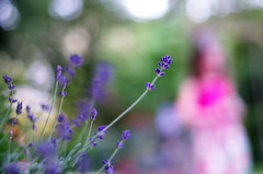 flowers in the garden (Stefano Rugolo) Tags: pentax k5 spring 2016 green garden lazio italy perspective flowersinthegarden depthoffield plant smcpentaxm50mmf17 bokeh daughter lavender stefanorugolo