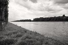 Insel Rott (Manfred Hofmann) Tags: brd flussundsee kurpfalz orte projekte themen uferpromenade flickr ffentlich