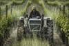 lamborghini tractor (Franco Marconi) Tags: lamborghini tractor vineyard exif geotagged new