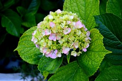 Flowers (latifalaamri) Tags: morocco tanger green