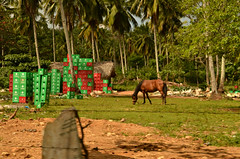 Dominican Recycling Center (Basse911) Tags: trees horse fence bottles dominicanrepublic recycling republicadominicana beercrates ellimn samanapeninsula