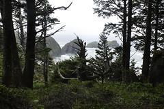 _MG_5413 (Krista Maxine) Tags: oregon portland pdx oregoncoast cannonbeach westcoast travelphotography