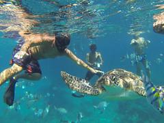 Similan Adalar (gezgincift) Tags: thailand similan similanisland khaolaklanddiscovery similanadas divinginsimilan
