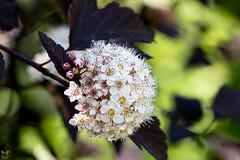 (FiniaY) Tags: flowers blumen makro bunt farben