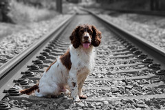On the railroad (Flemming Andersen) Tags: dog zigzag