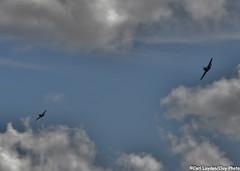 TopGun_2016_day5-405 (ClayPhotoNL) Tags: plane model sale rc fte