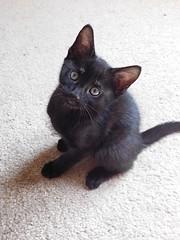 (lindsey.davis97) Tags: lighting morning cats love nature beautiful animal animals cat
