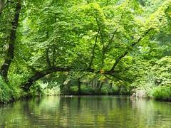 Spreewald (Ina Hain) Tags: green nature water landscape nationalpark wasser forrest natur olympus kanal grn spree landschaft wald spreewald schilf leipe fliess