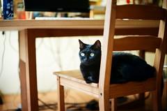 black cat (popo kuo) Tags: nikon ftn nikkor 50mmf14 fujifilm 100  cat film taiwan