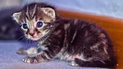 #Cats #gattini #gatos #1200d#cuccioli#cachorro#gatitos (vladydc1) Tags: cats gatos cachorro gatitos cuccioli gattini 1200d